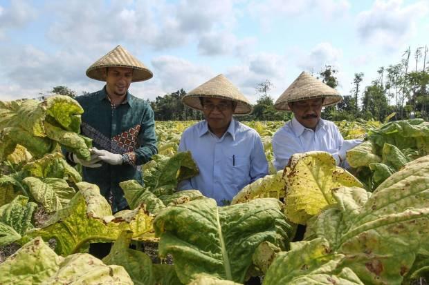 Kemitraan Jadi Syarat Izin Impor Tembakau