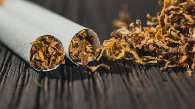 Tembakau Laris Manis setelah Cukai Rokok Naik