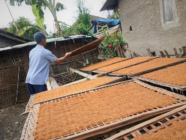 Tembakau Mole Garut Terkenal Hingga Malaysia