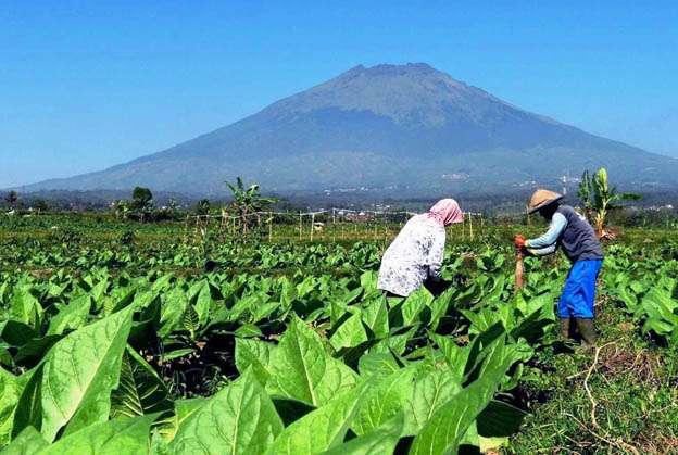 Pemkab Temanggung Bentuk Kawasan Industri Hasil Tembakau
