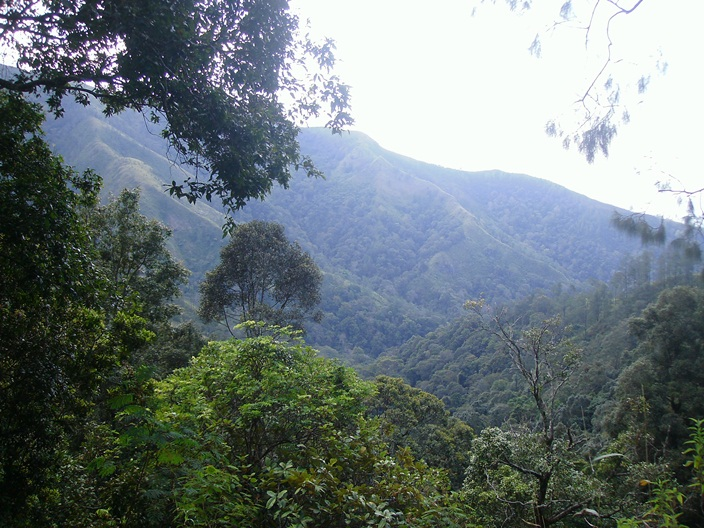 Harta Karun Terpendam di Gunung Wilis Bernama Cengkeh