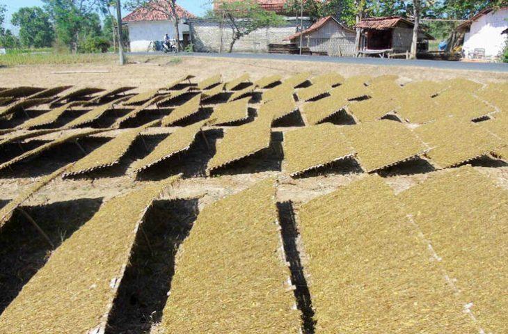 Target Pembelian Tembakau Madura Naik 1.450 Ton
