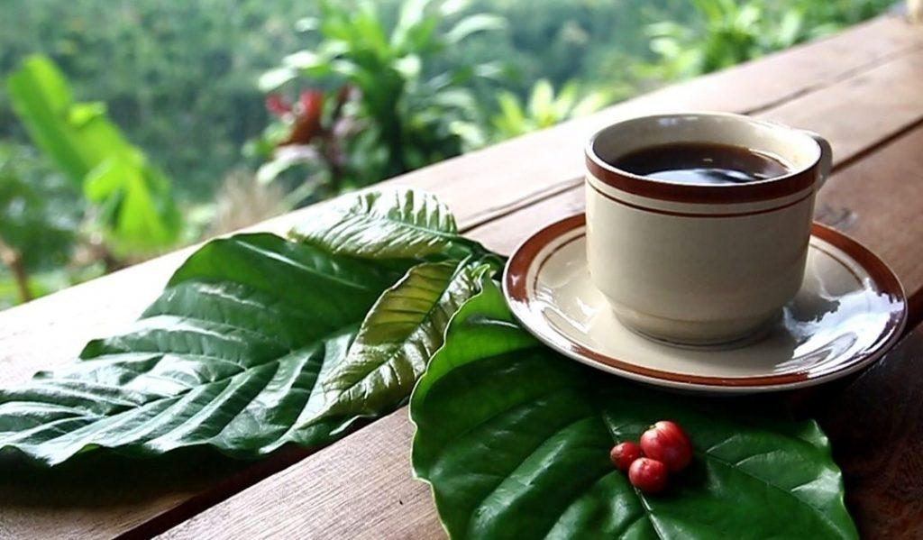 Desa wisata di Temanggung diminta sajikan kopi dan tembakau lintingan