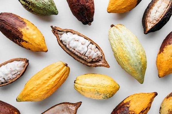 Ini 5 Manfaat  Kakao untuk Kesehatan