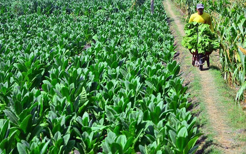 Indonesia Butuh Investasi Industri Tembakau