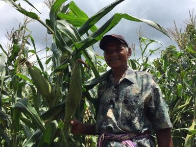 Pertanian Konservasi Bantu Petani Hadapi Perubahan Iklim