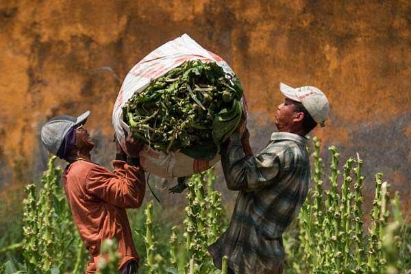 Kementerian Perindustrian Dukung Pengembangan Produk Tembakau Alternatif