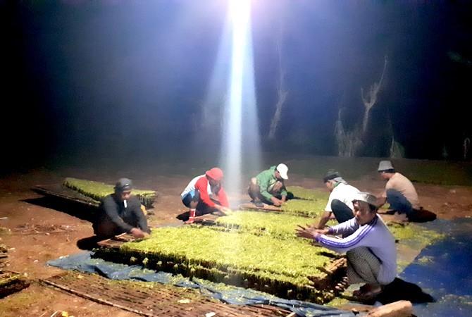 Tembakau Madura Berjaya di Pulau Garam